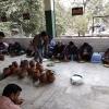 chaudhary mitter sen ji janm diwas founders day param mitra (34)